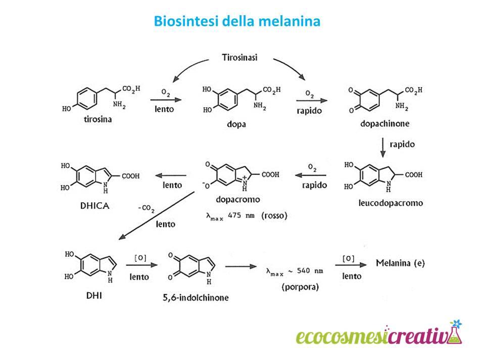 biosintesi melanina